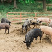 all-natural pork