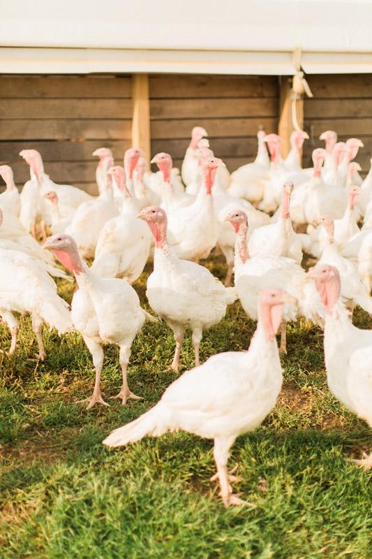 All-Natural Turkey Wholesale - Sunrise Farms