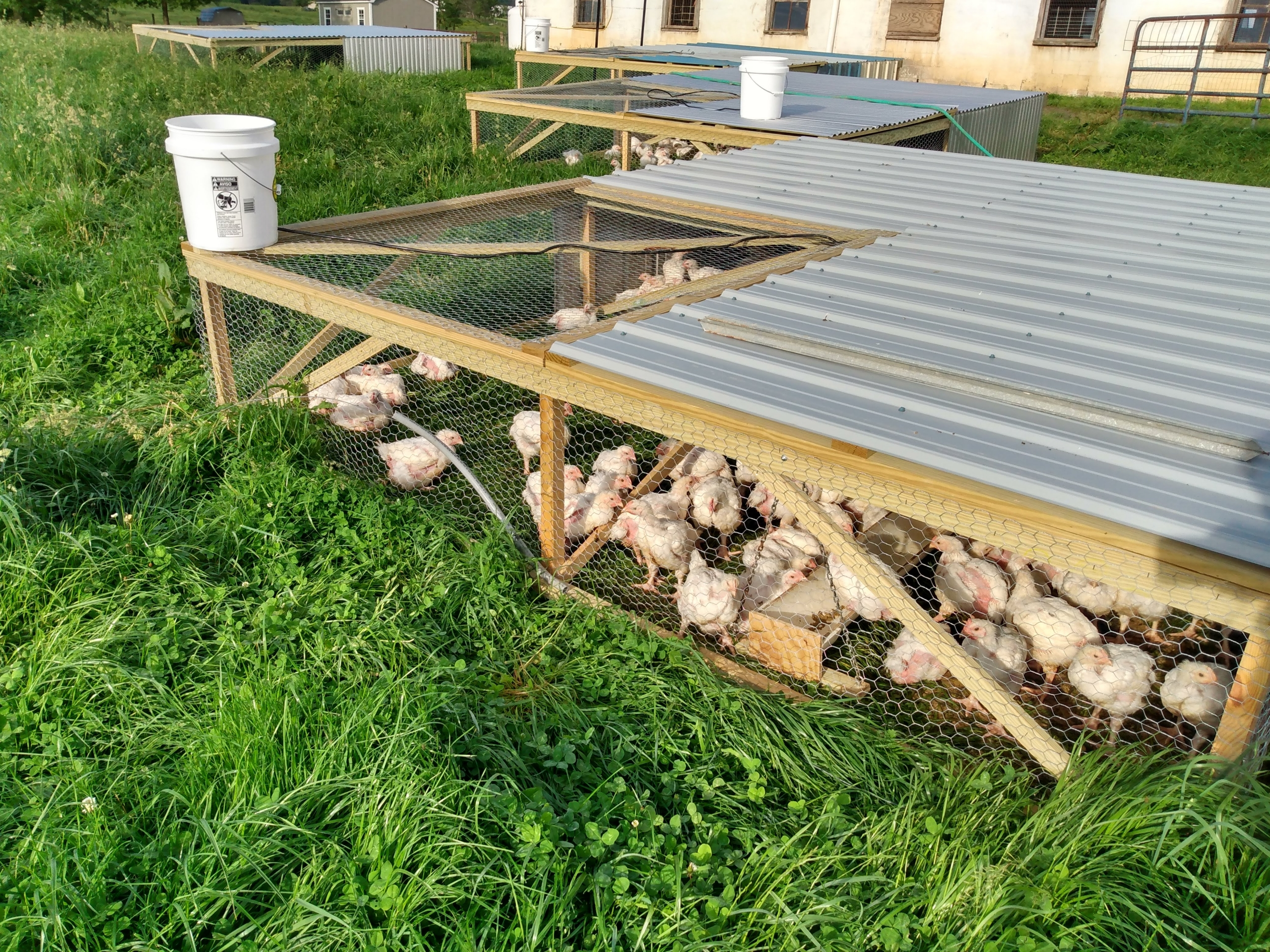Broiler feed and chickens