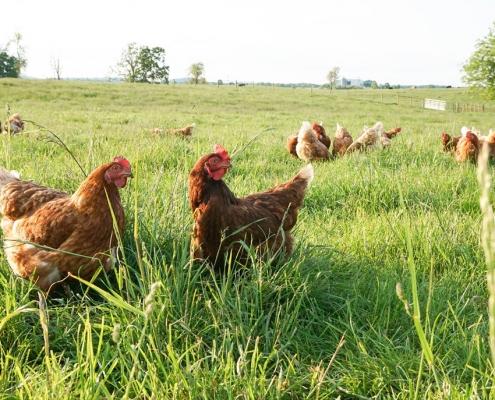 Sunrise Farms Non GMO Products